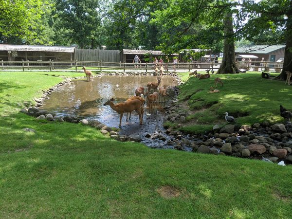deer petting zoo
